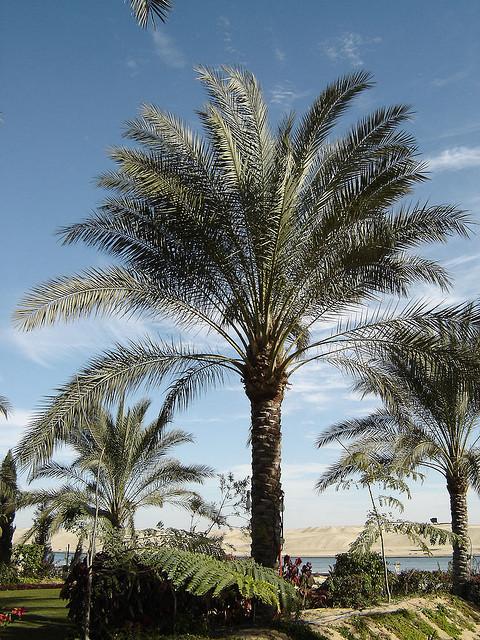 Passer un no l diff rent en egypte - Image palmier ...